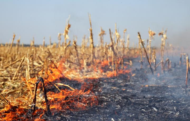 A scrawling line of orange flames separates a burned section of a harvested cornfield from an unburned portion.