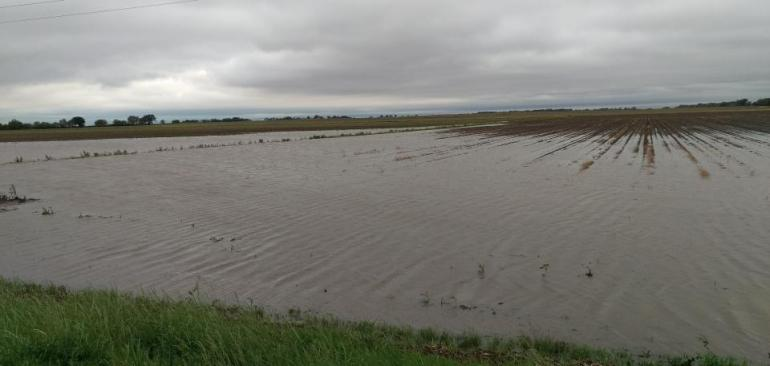 A newly planted field is hidden under floodwaters and a moody gray sky